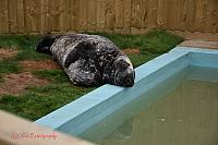17.04.20 Mablethorpe Seal sanctuary and Wildlife centre